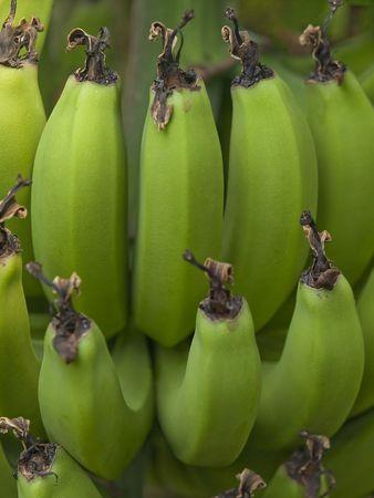 手のひらに緑のバナナのクラスター
