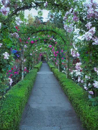 Passage ornate with roses forming multiple archs  Imagens