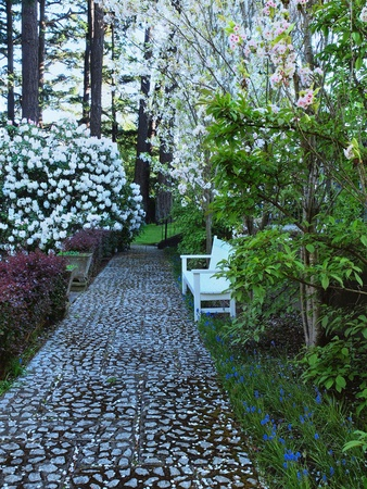Garden bench in a romantic alley surrounded by lush spring vegetation photo