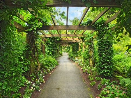 Pergola passage in the garden, surrounded by wisteria and climbing plants Editorial