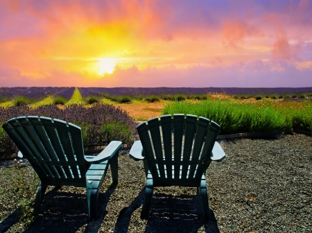 Chairs on a kavender field in bloom during sunset
