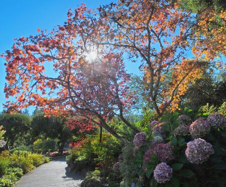 Garden walkway by the colorful fall trees and bushes, backlit by sun