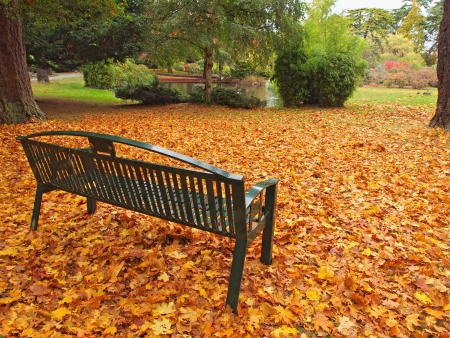 Bench in the park among colorful foliage during fall season photo