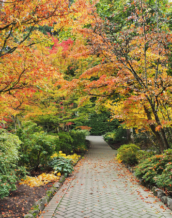 autumn path: Paved walkway in the park with autumn colors Stock Photo