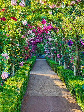 Arched passage decorated with climbing roses