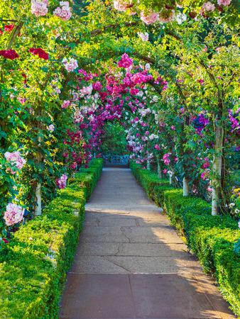 arcuate: Passaggio ad arco decorato con rose rampicanti
