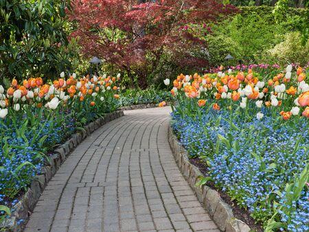 empedrado: calzada pavimentada en el jard�n de primavera entre los tulipanes en flor Foto de archivo