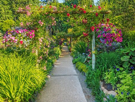 Passage in the garden covered with climbing roses