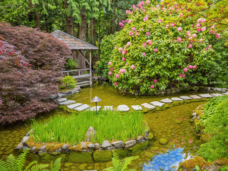 stepping: Stepping stones over the pond in the spring garden
