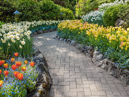 yellow blossom: Paved walkway in the spring garden among blooming tulips and daffodils Stock Photo