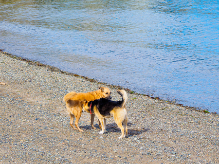 Two dogs playing on the beach near the water edge Imagens