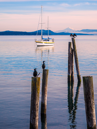Cormorant sitting on piles at the shore. Sidney, BC, Vancouver Island, Canada