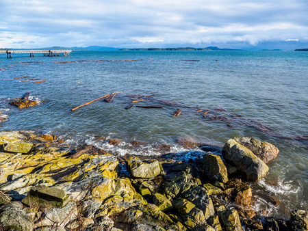 Sidney BC shore with driftwood after the windstorm, Vancouver Island, British Columbia, Canada