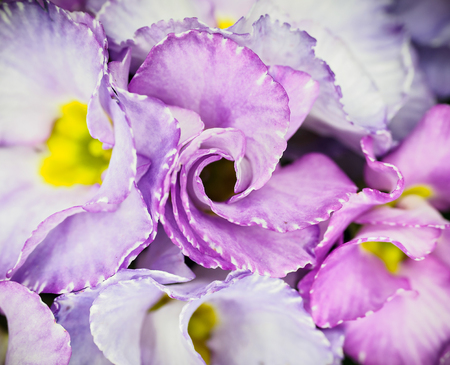 Abstract flower background, purple and white spring circular flowers