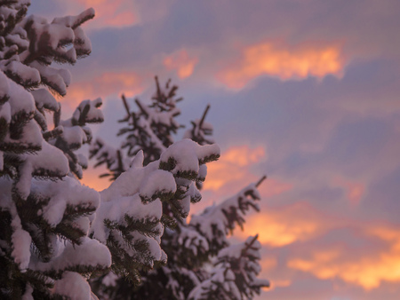 Dramatic sky during sunset over tree branches covered with snow