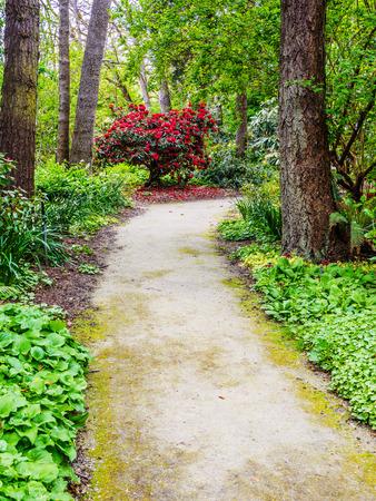 Ścieżka spacerowa wśród kwitnących wiosną rododendronów