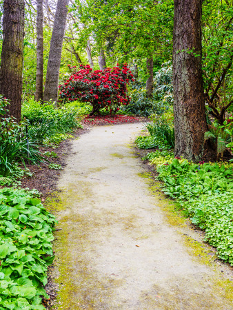 Walking path among blossoming rhododendrons in the spring Reklamní fotografie