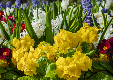 White hyacinths and yellow summer flowers on the flowerbed