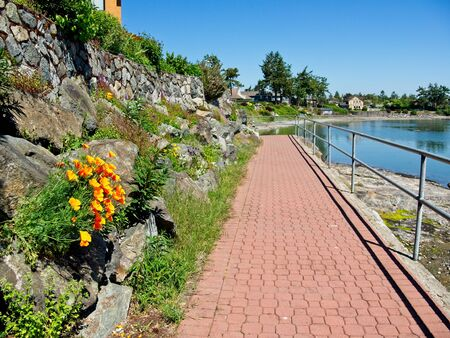 Wallflowers (Erysimum) decorating rocky retaining wall along the walking path on the shore