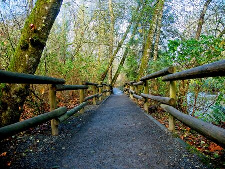 Goldstream Park in British Columbia, Vancouver Island in the fall 版權商用圖片