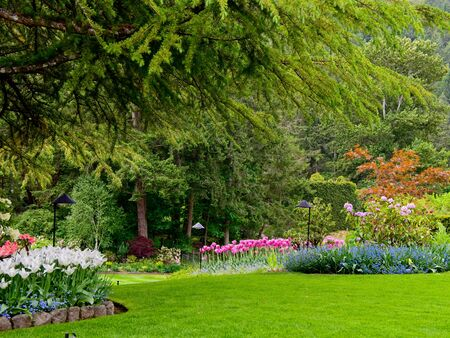 Spring garden with pathways between tulip flowerbed and blooming trees Archivio Fotografico