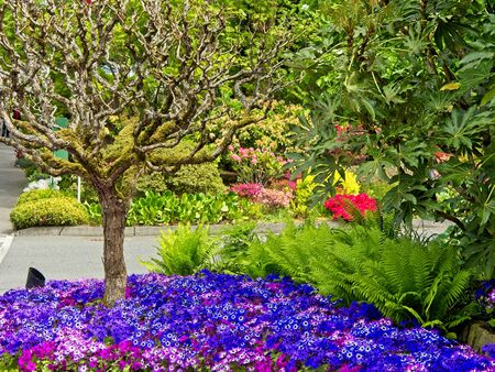 Spring garden with flowerbed and blooming trees