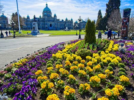 Springtime blooming flowers in downtown of Victoria BC on Vancouver Island, Canada 写真素材