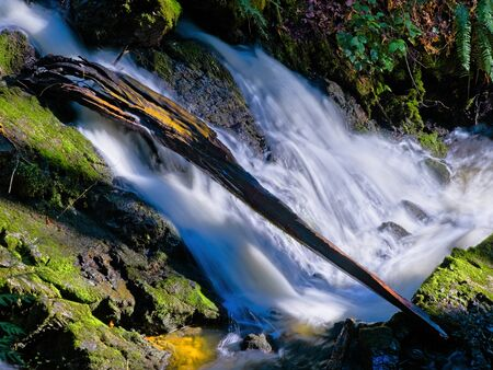 Waterfall in the forest with log and mossy rocks