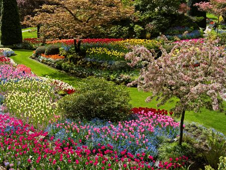 Lush garden blooming in the spring with colorful tulips on the flower beds