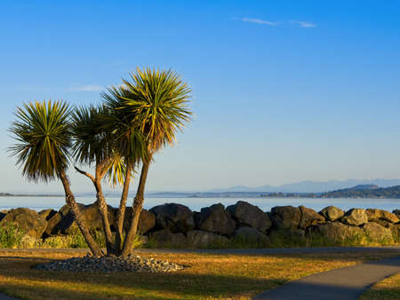 Palm tree on the shore of Sidney BC, Vancouver Island