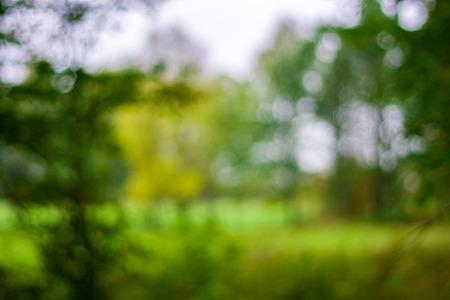 Unscharf Frühjahr oder Sommer-Ansicht mit leuchtenden grünen Farben und Bokeh Standard-Bild - 22288420
