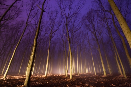 Foggy evening in a spooky forest with magical lights shining between the trees
