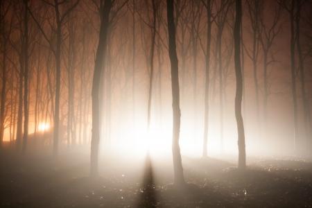 안개 낀 숲에서 빛의 광선