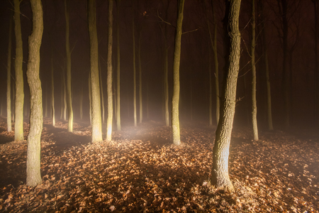 Foggy evening in a spooky forest with magical lights shining between the trees photo