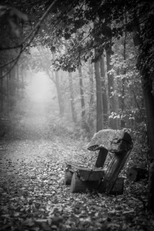 Vertical shot of a bench in a foggy autumn forest Archivio Fotografico