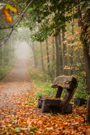 Vertical shot of a bench in a foggy autumn forest photo