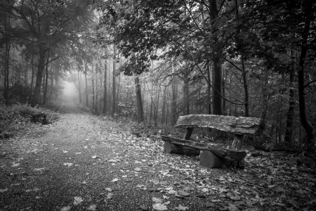 Horizontal shot of a bench in a foggy autumn forest