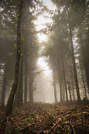 Vertical shot of a scary, fairytale-like autumn forest covered in fog photo