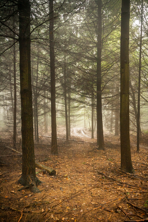 Vertical shot of a track going through a scary, fairytale-like autumn forest covered in fog photo