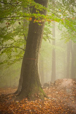 Vertical shot of a tree in a scary, fairytale-like autumn forest covered in fog photo