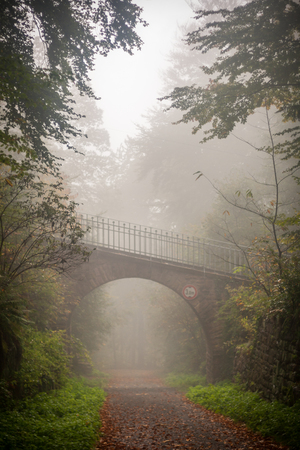Vertical shot of a road going under the bridge in a scary, fairytale-like autumn forest covered in fog photo