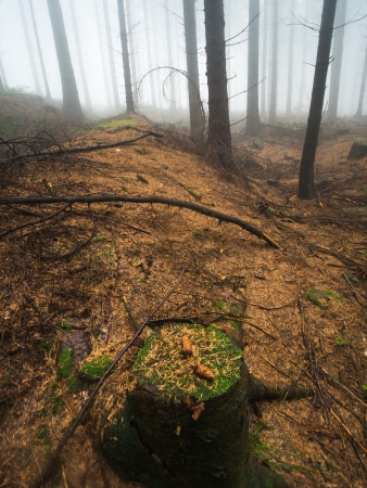 A stump covered in moss in the foggy forest photo