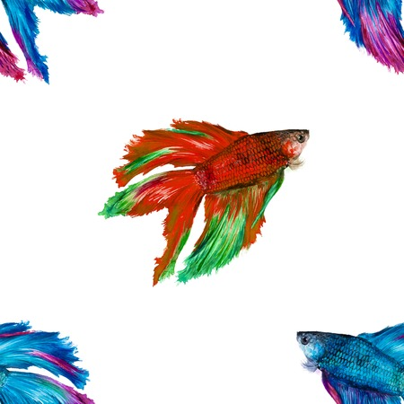 siamese: Watercolor repeatable seamless pattern of a siamese fighting fish on a white background Stock Photo