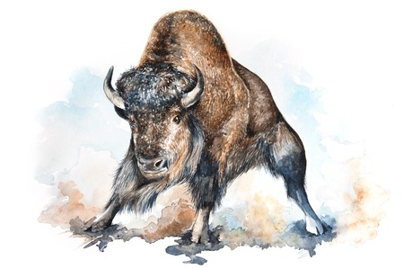 bison: Watercolor illustration of an angry bison surrounded by dust clouds Stock Photo