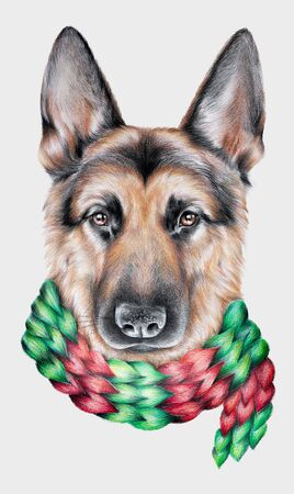 Pencil portrait of a german shepherd dog wearing a colorful red and green scarf