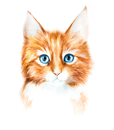 kitties: Watercolor drawing of a red kitten