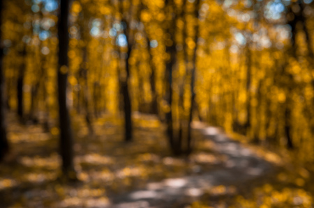 Blurry landscape useful as background - autumn forest