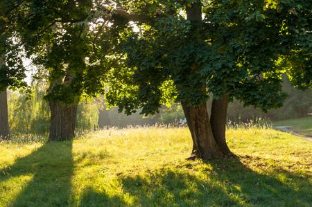 Sonnenuntergang, wie in Aleksandria-Park in Belaya Tserkov, Ukraine gesehen. Geschossen an einem hellen sonnigen Sommertag. Goldene Sonne, die durch die Bäume und das Gras auf dem grünen Hügel scheint. Standard-Bild - 84848878