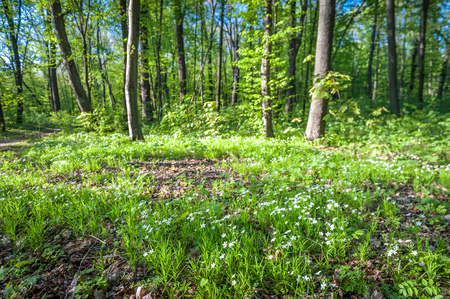 Green forest with strong vegetation, lots of grass, flowers and trees, no people. Shot on a sunny, peaceful day Standard-Bild