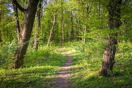 Grüner Wald mit starker Vegetation, viel Gras, Blumen und Bäumen, keine Menschen. Gedreht an einem sonnigen, ruhigen Tag Standard-Bild - 84848797
